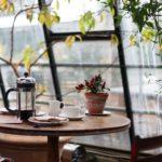 Árboles en maceta pequeños para hogar